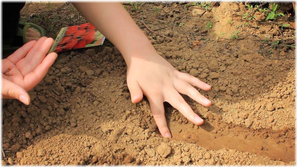 Когда сажать семена клубники на рассаду в 2016 году