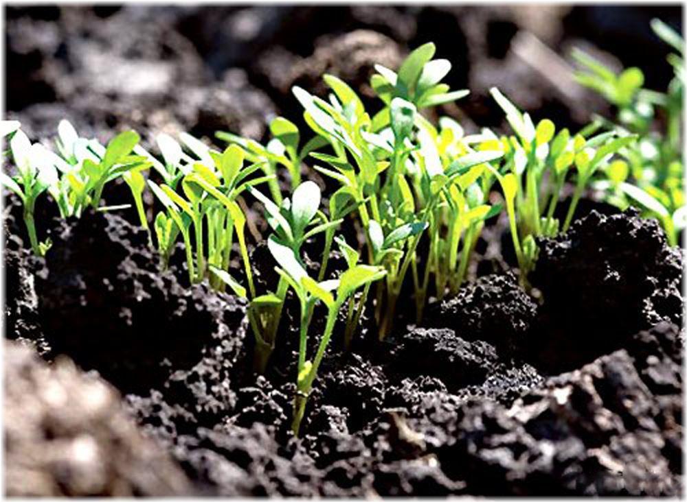 Когда сажать кабачки семенами в открытый грунт в 2016 году