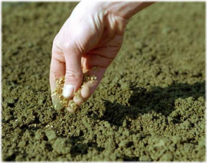 Плюсы подзимнего посева и когда его осуществлять
