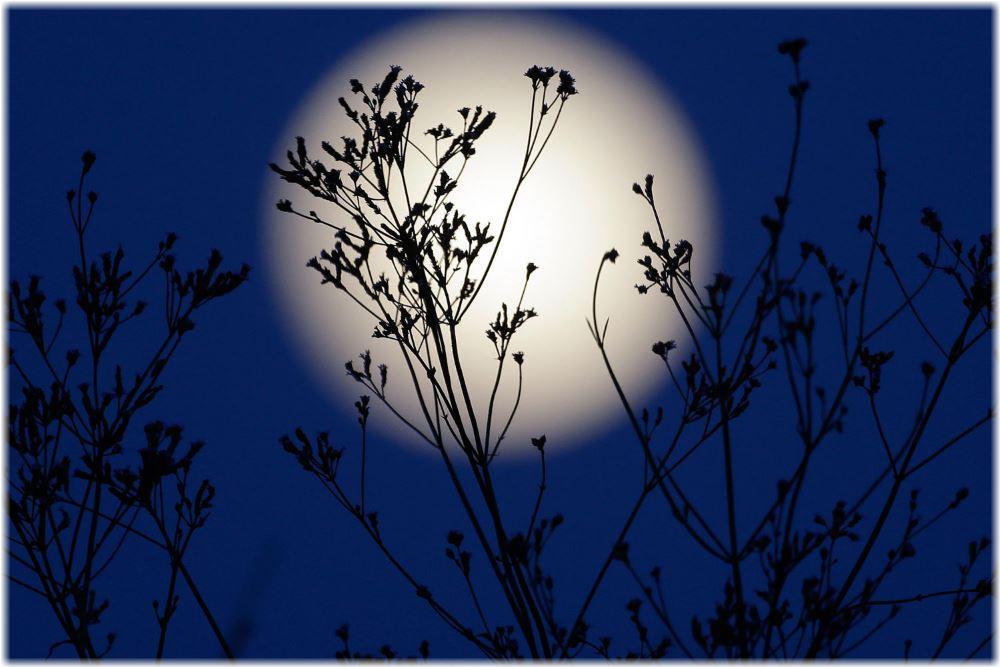 Когда сажать семена клубники на рассаду по лунному календарю