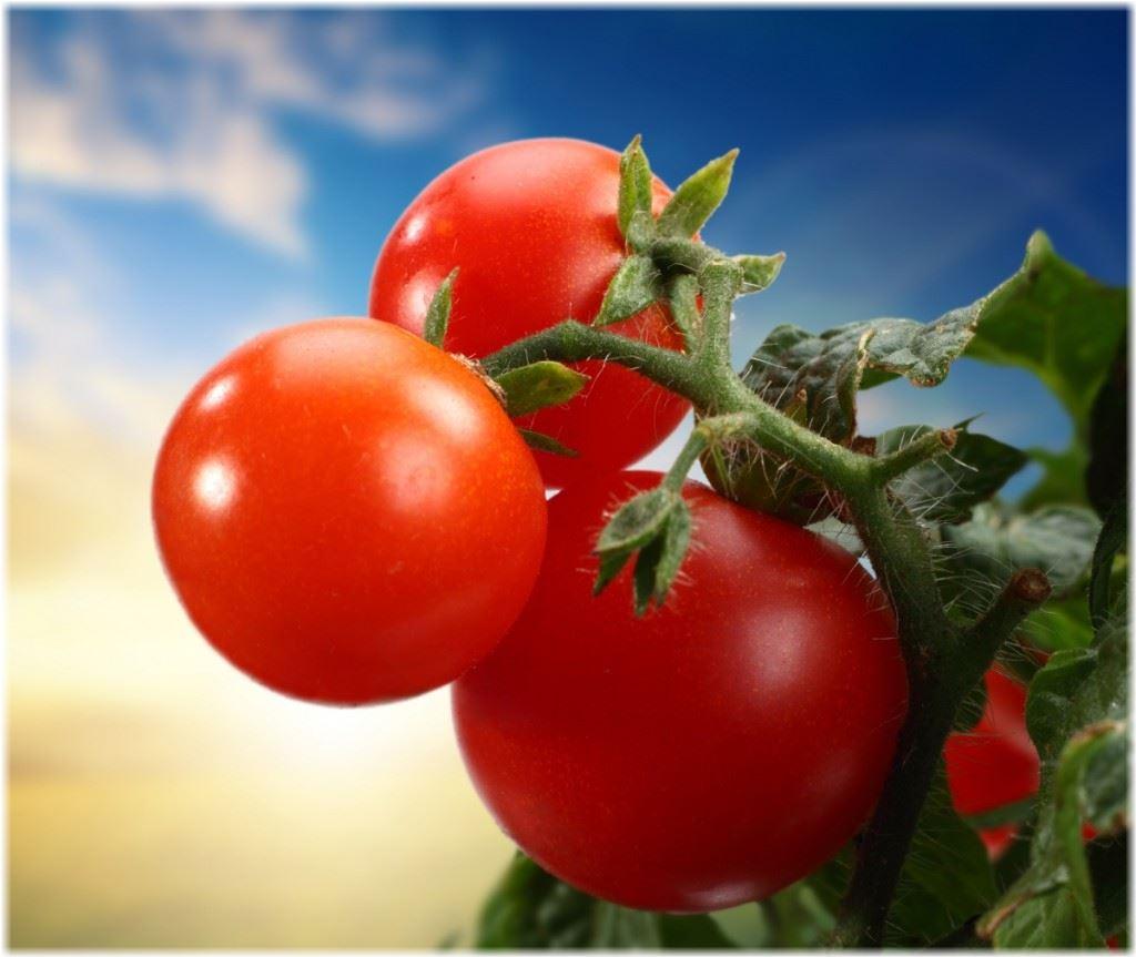 Когда сажать помидоры на рассаду в 2016 году по лунному календарю